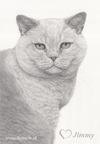 kattenportret Jimmy