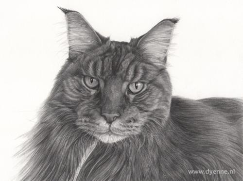 kattenportret Mico
