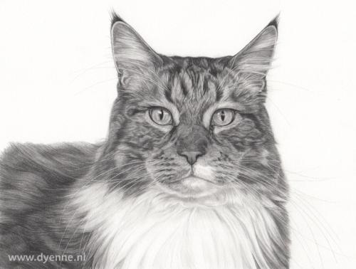 kattenportret Paco